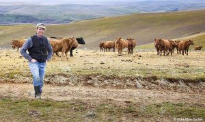 c59-Ian-Murdock-Cows-Cattle-Ranch_07v_02.jpg